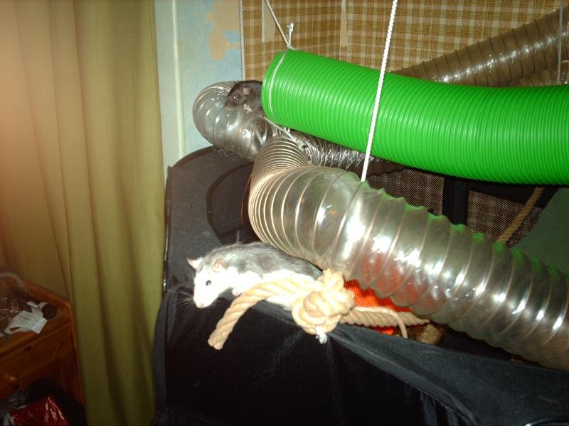 Enclos en nylon reconverti en aire de jeu ( photos ) - Page 5 Imag1012