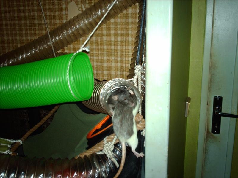 Enclos en nylon reconverti en aire de jeu ( photos ) - Page 5 Imag1013