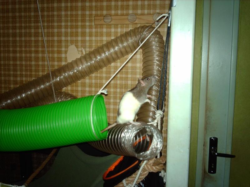 Enclos en nylon reconverti en aire de jeu ( photos ) - Page 5 Imag1014