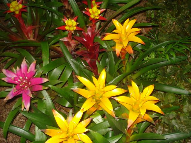 A la recherche de la mystérieuse fleur d automne 510