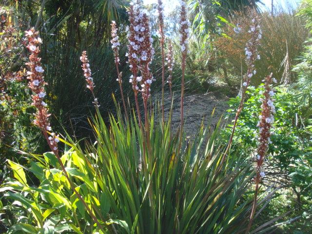 Jardin merveilleux Ariste10