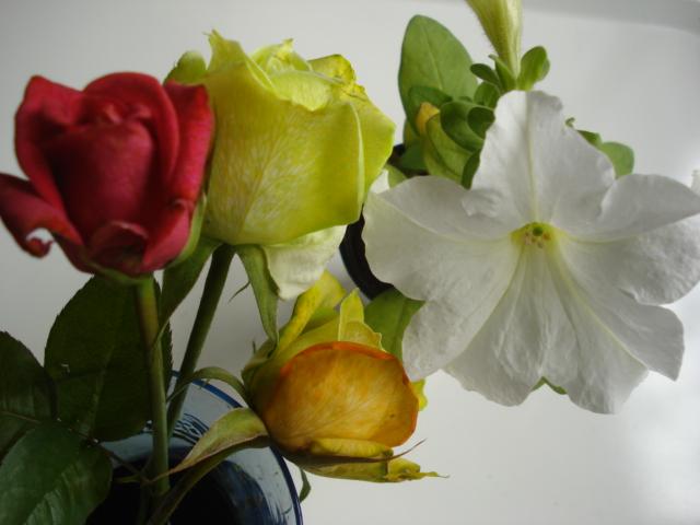 Changer la couleur d une fleur Blle_c10