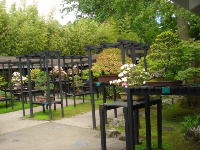 Jardin merveilleux Bonsai10