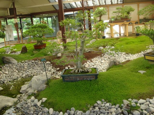 Jardin merveilleux Bonsai12