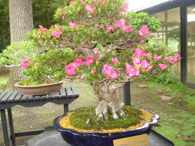 Jardin merveilleux Bonsai13