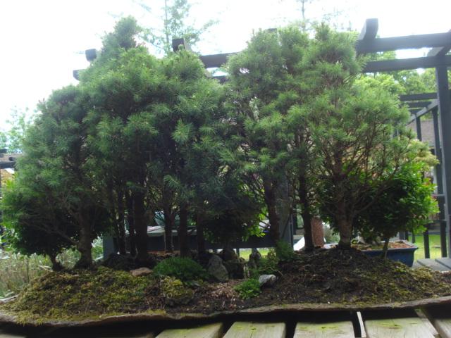 Jardin merveilleux Bonsai14