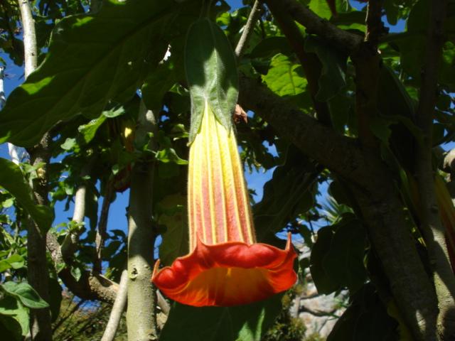 Jardin merveilleux Brugma16
