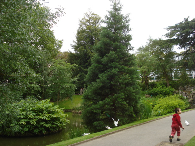 Jardin merveilleux C110