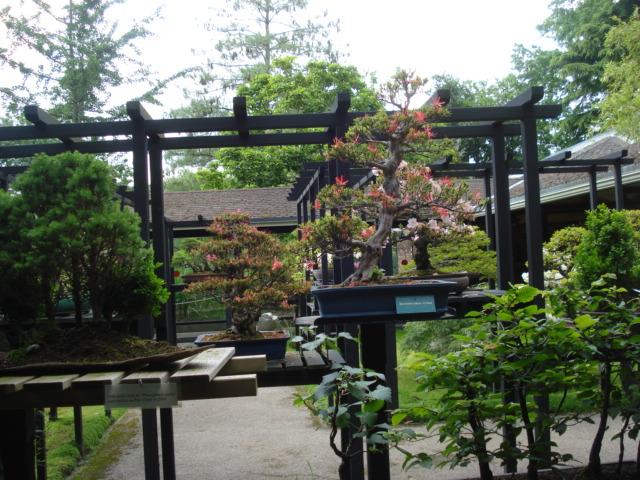 Jardin merveilleux D110