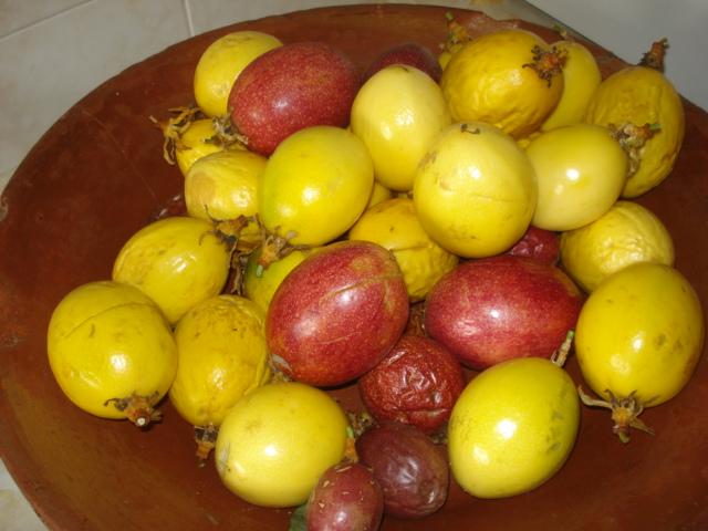 Comment agrandir sa collection de passiflora Dsc00013
