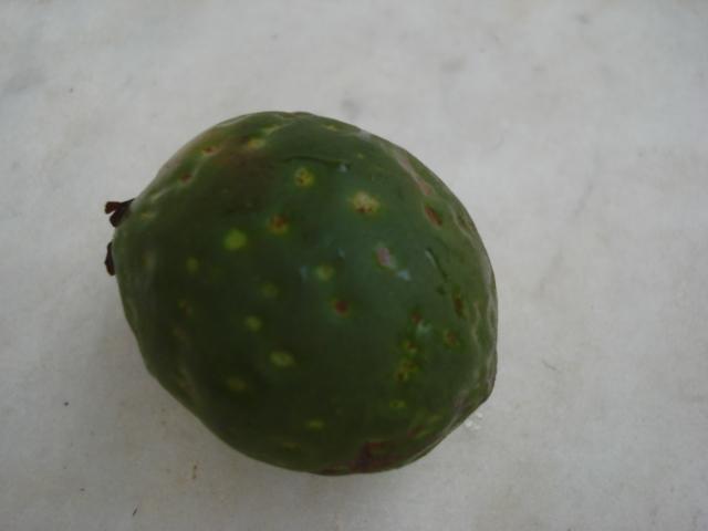 Ficus saussuriana : Ficus africain rustique ! Dsc00110