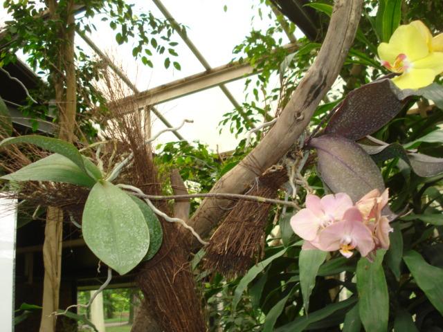 Jardin merveilleux Epiphy12