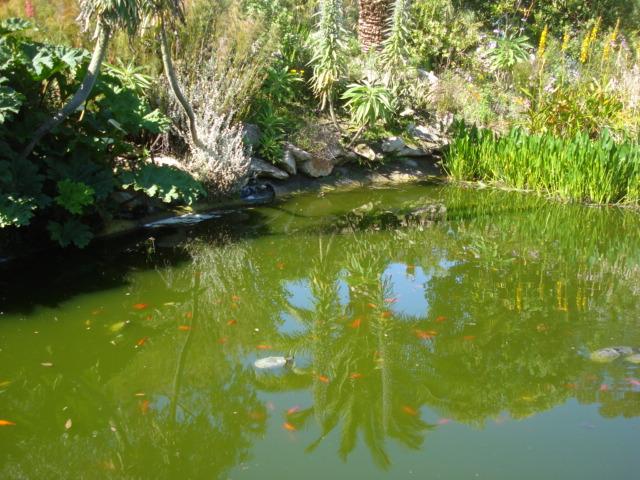 Jardin merveilleux F310