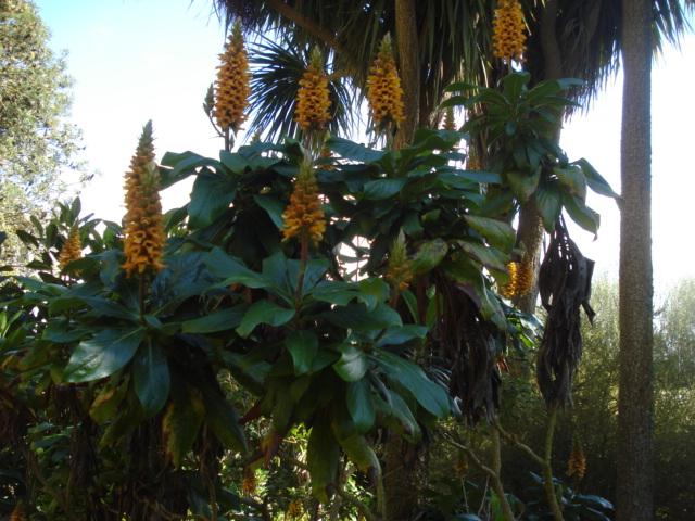Jardin merveilleux Fleur10