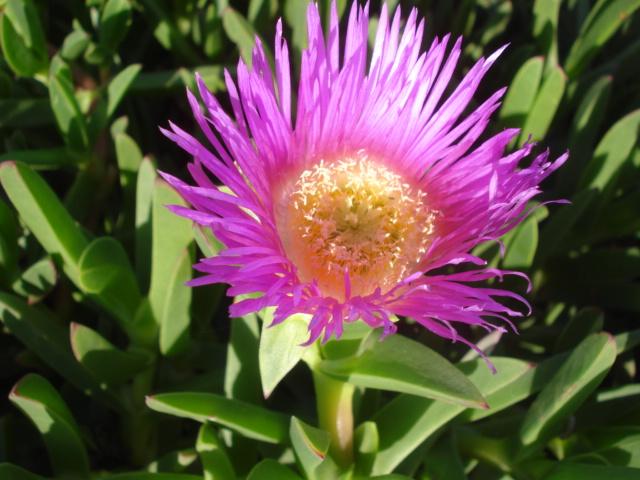 Espéces exclusivement épiphytes adaptables en zone 9 médi. Fleur_21