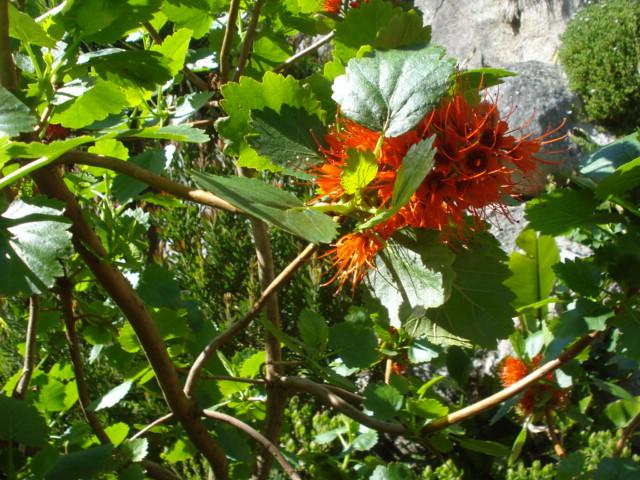 Jardin merveilleux Fleur_22