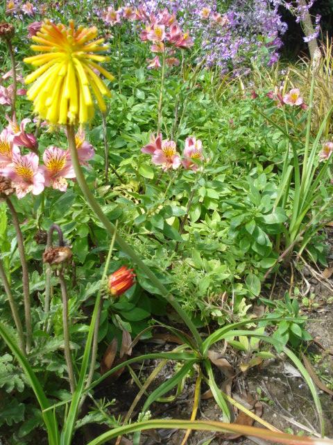 Jardin merveilleux Fleur_23