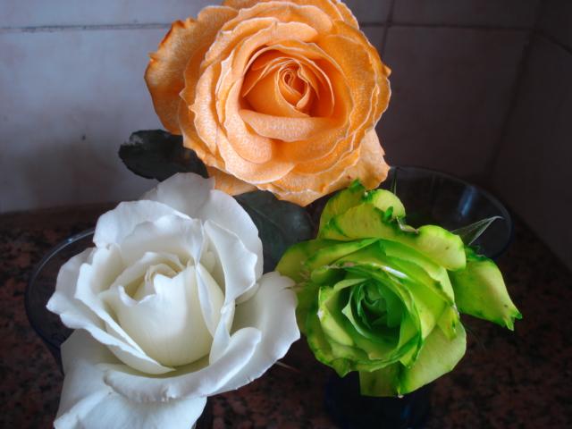 Changer la couleur d une fleur Fraich10