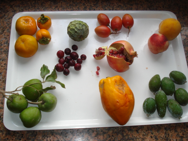 Comment agrandir sa collection de passiflora Fruits11