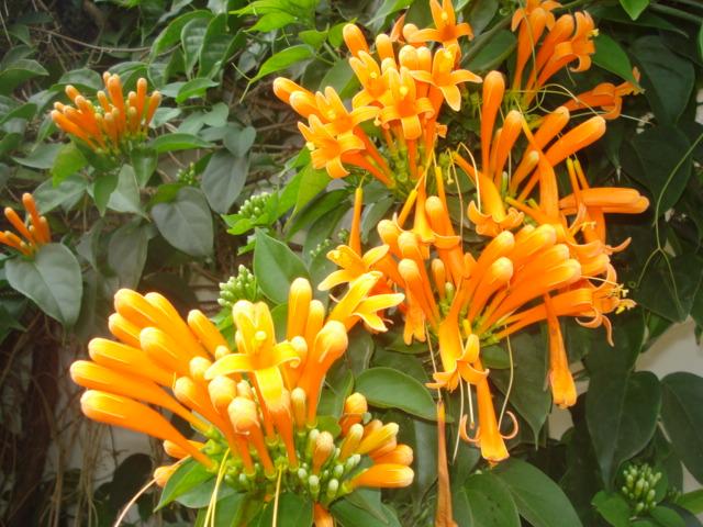 A la recherche de la mystérieuse fleur d automne Grimpa16