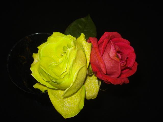 Changer la couleur d une fleur Jaune_10