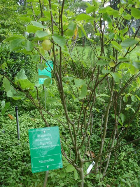 Jardin merveilleux Magnio10