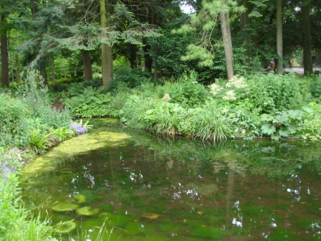 Jardin merveilleux Mare10