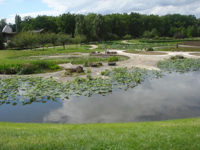 Jardin merveilleux Nenuph10