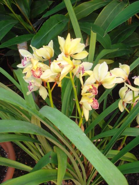 A la recherche de la mystérieuse fleur d automne Orchid12