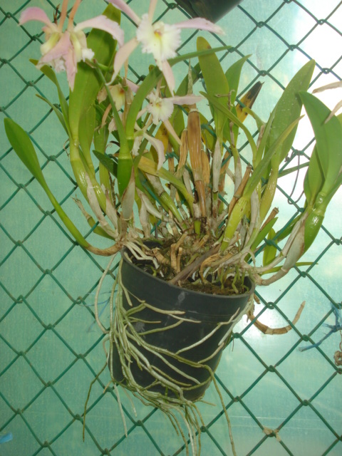 A la recherche de la mystérieuse fleur d automne Orchid13