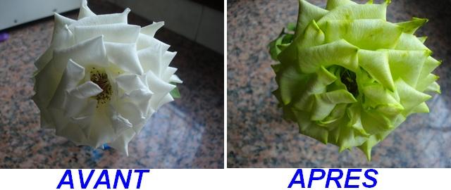 Changer la couleur d une fleur Rose_a10