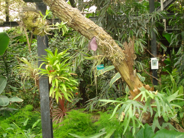 Jardin merveilleux Stand_10