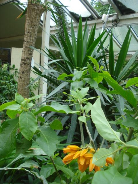 Jardin merveilleux Stand_11