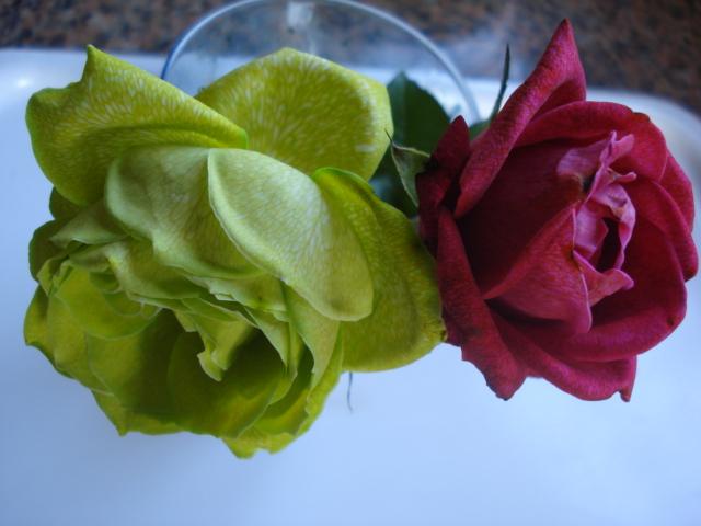Changer la couleur d une fleur Vert_p10