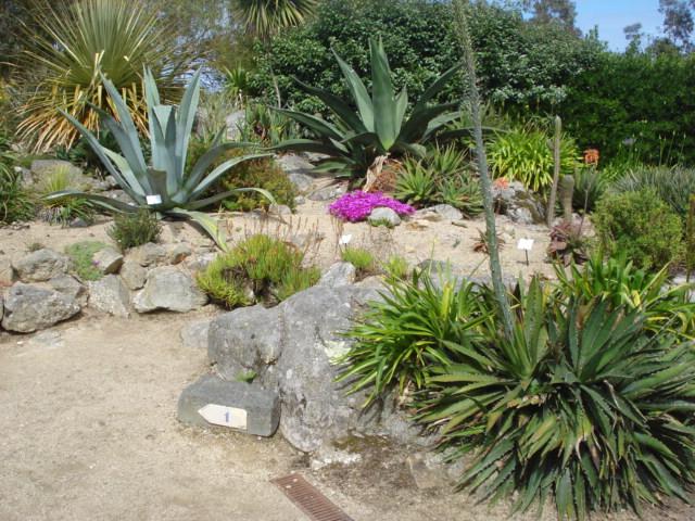 Jardin merveilleux Vue_a12