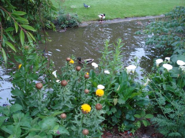 Jardin merveilleux Vue_b10