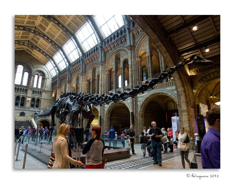 LONDRES : Natural History Museum P6073311