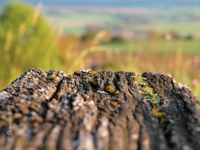 La butte de Montenoison (Nièvre) P9228012