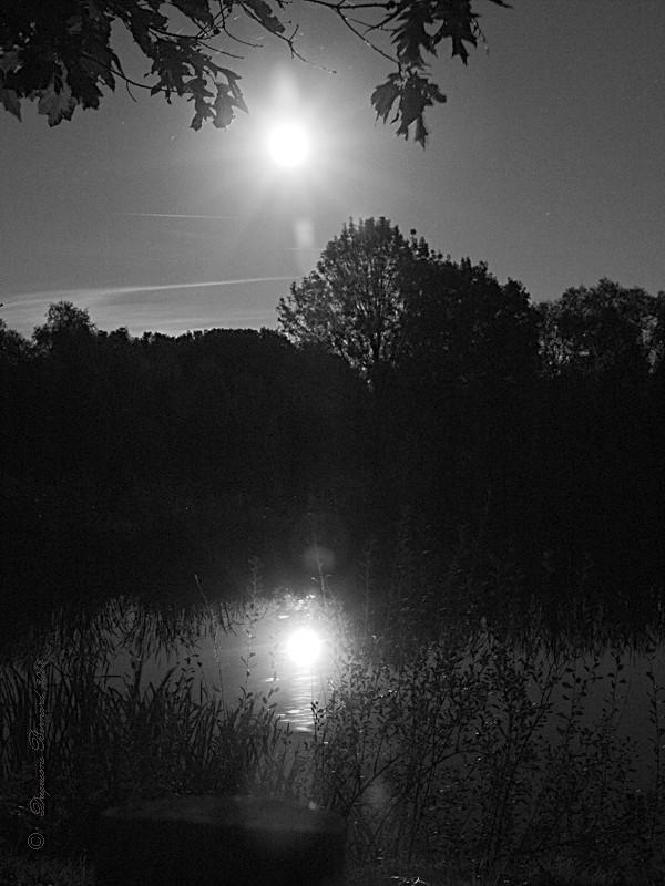 Reflet .... Pa305711