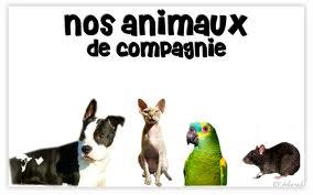 Charlotte Animau11