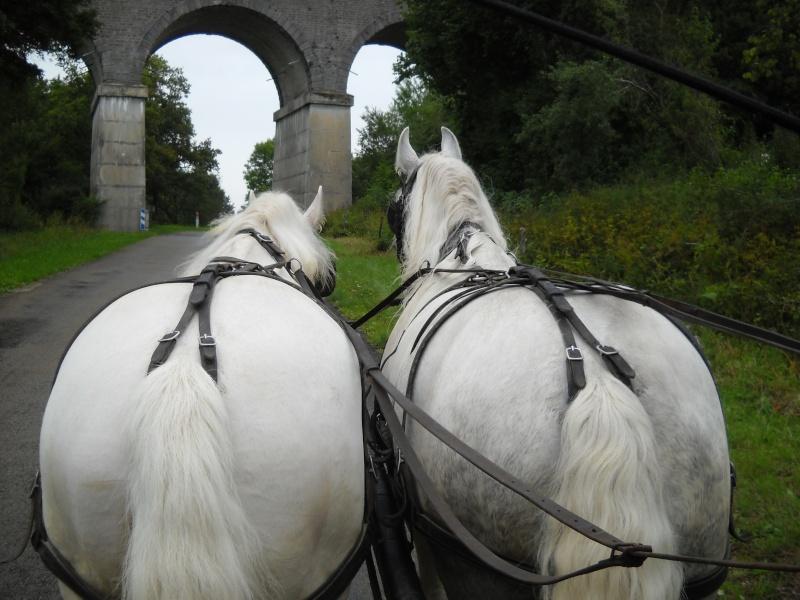 THEME DE DECEMBRE 2012 : les ponts! (3 photos autorisées) - Page 3 Dscn1410