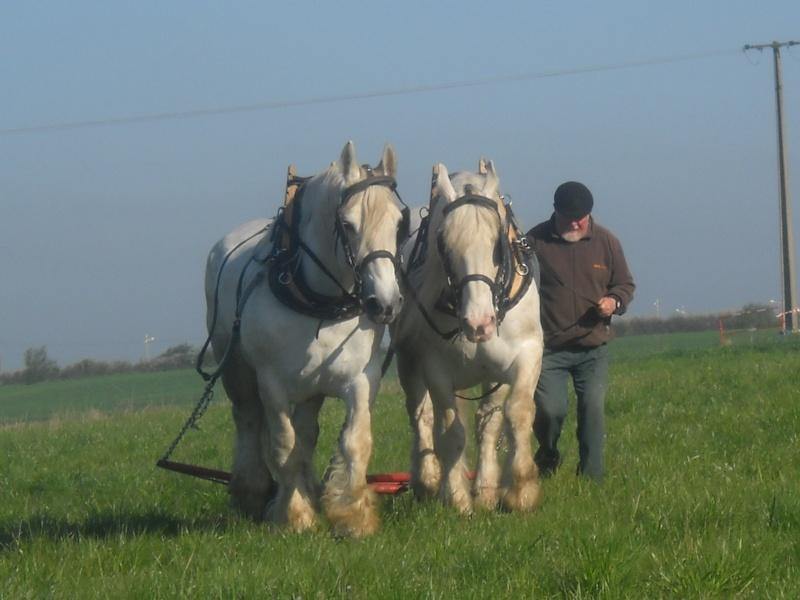Thème de Janvier : le cheval au travail - Page 4 Dscn3410