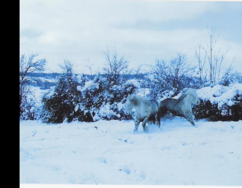 Concours Photos Décembre : Le Cheval et la Neige Nagus_10