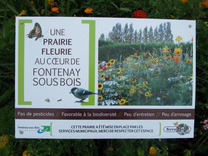Fontenay: une ville mal entretenue. Pourquoi? Prairi10