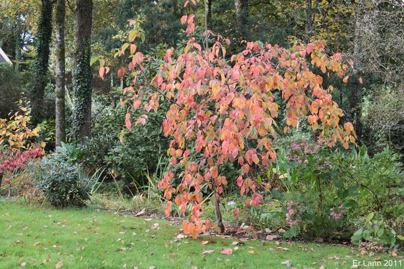 couleurs d'automne Img_5219