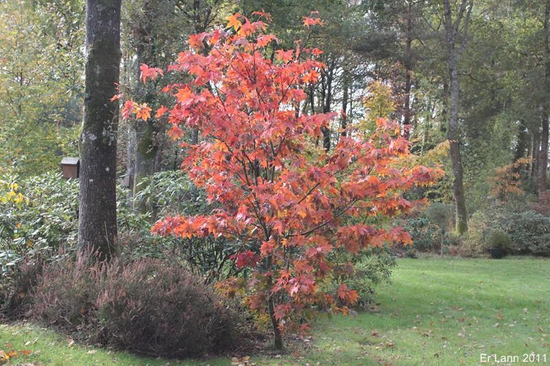 couleurs d'automne Img_5220