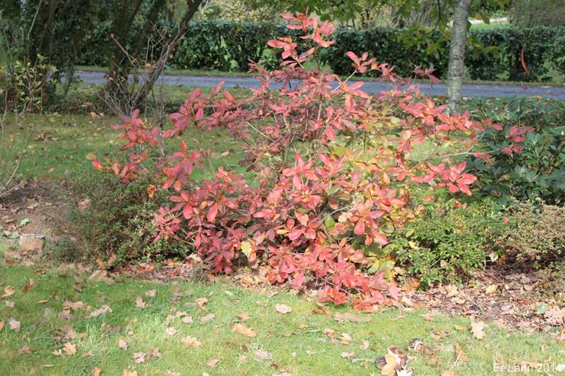 couleurs d'automne Img_5221