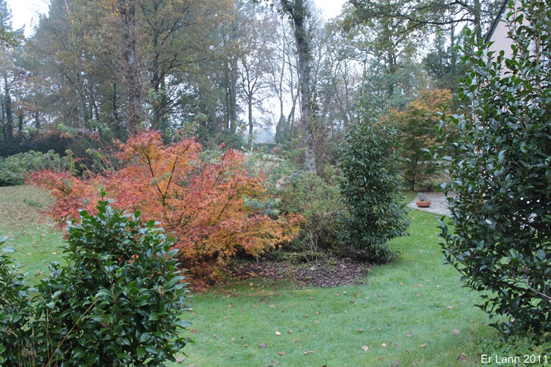 couleurs d'automne Img_5312