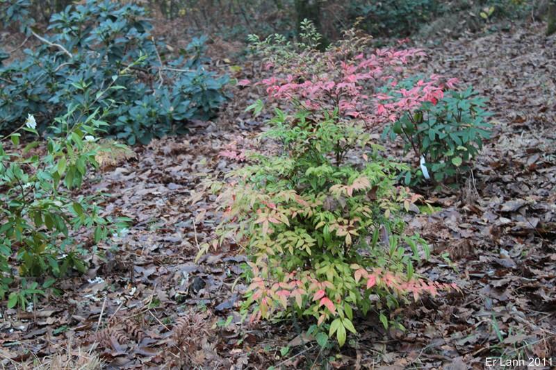 couleurs d'automne Img_5313