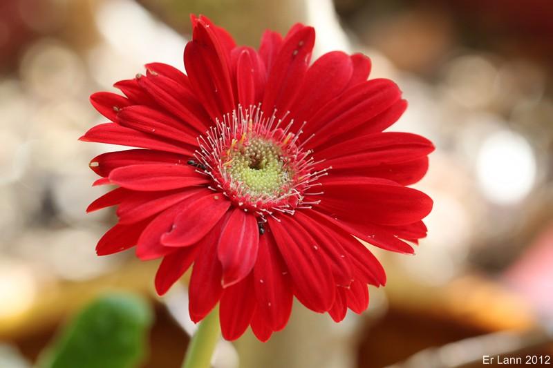 Floraisons d'intérieur  Img_6610